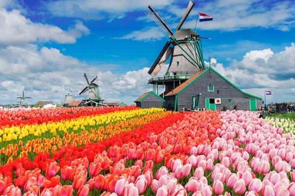 kerekpartura-hollandia-tulipanviragzas-3024F9E5C2-CE8A-142A-120D-E4997650604B.jpg