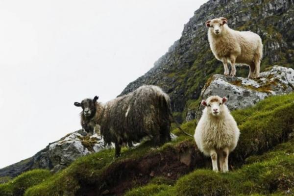 feroer-gyalogtura-trekking-kalandtura-27FED2197F-0224-E368-8CAB-6F7F006AB692.jpg