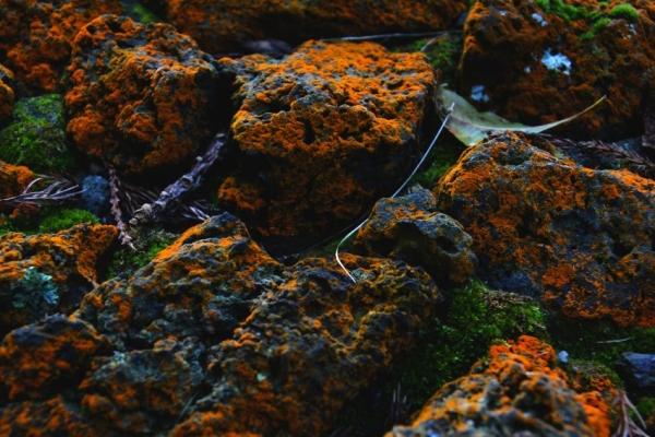 kalandnyaralas-tura-azori-szigetek-2-faial-flores-pico-1210194009-6E62-9BA3-E778-B800B07CB0DA.jpg