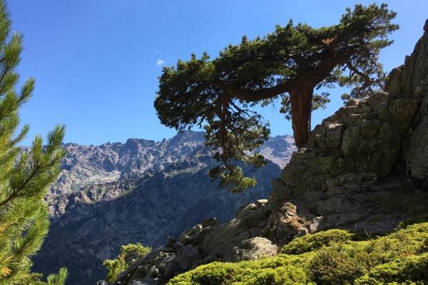 gr20-korzika-europa-legnehezebb-trekking-tura-14688DD8EA8-8011-DEEF-B265-F07EC71333DE.jpg