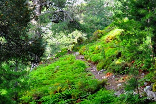 gr20-korzika-europa-legnehezebb-trekking-tura-20DB06A884-E280-EA0B-0AE9-B8D6849BA435.jpg