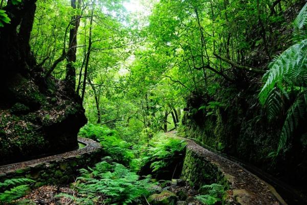 madeira-kalandtura-nyaralas-levada-canyining-tura-7FC1E88EA-7478-ACD6-287D-0328A419D6C6.jpg