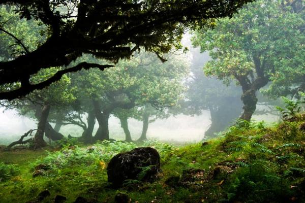 madeira-kalandtura-nyaralas-levada-canyining-tura-89746B2824-DD36-F20E-0DB5-5F7CA89C0C25.jpg